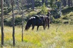 bild från ridturen hösten 2010 i området kring Lomviksgården