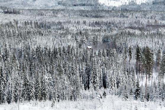 Vinterbild från de värmländska skogarna.