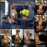 PicMonkey Collage01