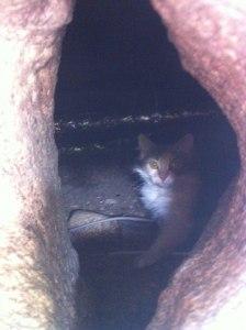 Mamma Chika under huset, var har du gömt ungarna undrade vi...