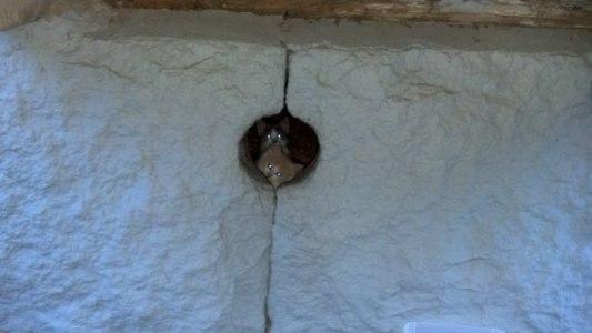 I det här hålet i husgrunden tror vi att ungarna föddes. Vi klättrade under huset genom en öppning via tvättstugan. På bilden syns Blondie och bakom syns Nala.