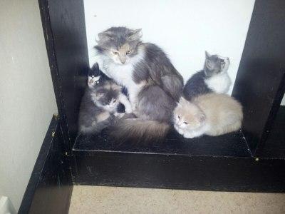 Hela familjen är infrångad! Blondie är längst till höger.