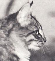 Fabian av Ulse, född 1989