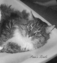 Pan's Truls, född 1973