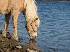 Hästbilder Hedebogård 105
