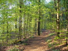 Bokskogen som blev naturreservat 2015