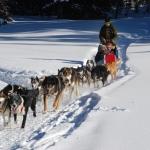 dog-sled-278875