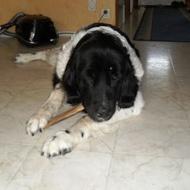 Ängla eats a bone