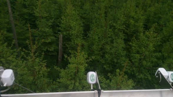 Synfältet för multspektralgivarna som riktas 45° nedåt mot granungskogen. Foto av Ola Langvall