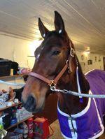Verity förbereds inför loppet bild: Carro H