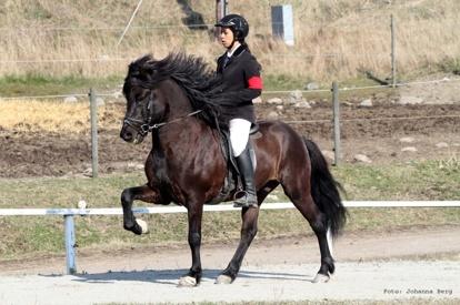 Jamila och Kveikur tävling 2014