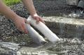 PhosLess påfyllning rörligt vatten