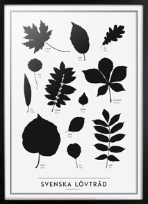The SE collection – Swedish leaves
