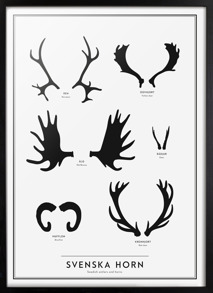 The SE collection – Swedish antlers and horns