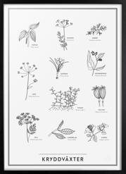 Kryddväxter