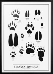 The SE collection – Swedish animal tracks
