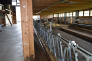The cow shed at Barenegg