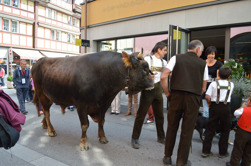 The young man leading the bull was given a schnapps