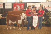 Grand Champion Female: WLB 36N Beth ET 452S. Born 2006. By HF 4L Beyond. Owned by Caylynne Brown, Cayley Cattle Company, Princeton.