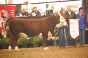 Grand Champion bull: Remitall West Game Day ET 74Y. Born 2011. By SHF M326 Wonder W18 ET owned by Remitall West, Bacon Herefords and Glengrov Farms.
