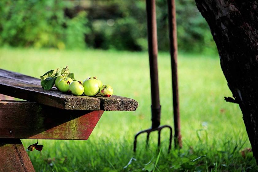 Vad skall man tänka på när man skall köpa en handgräsklippare?