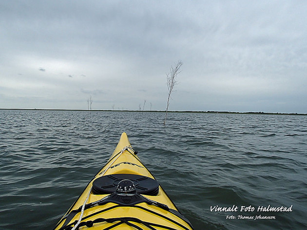 Under kajaken är det en väg vid lågvatten därför kvastarna i vattnet.