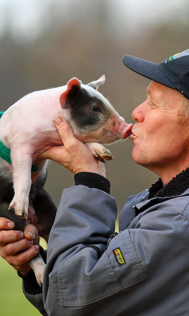 Aj fn...den lilla grisen visste vad som var på G...därav den simmiga blicken.