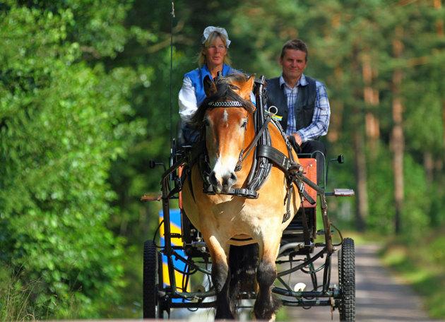 Från gården skall man kunna åka häst o vagn till Lurrehus på picnik...jag fick åka med en liten bit och jag lovar det är riktigt rogivande!!