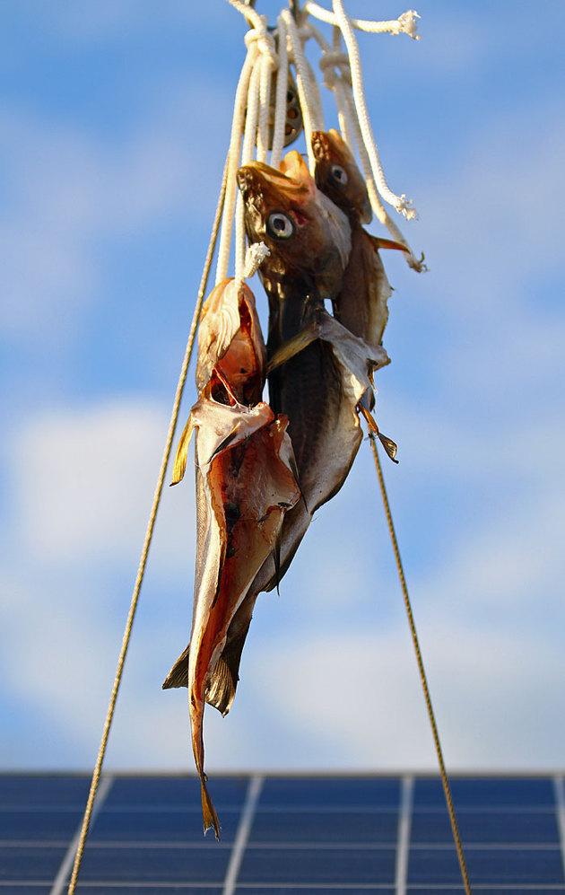 Här hänger dom i häckstaget dom blivande chipsen...