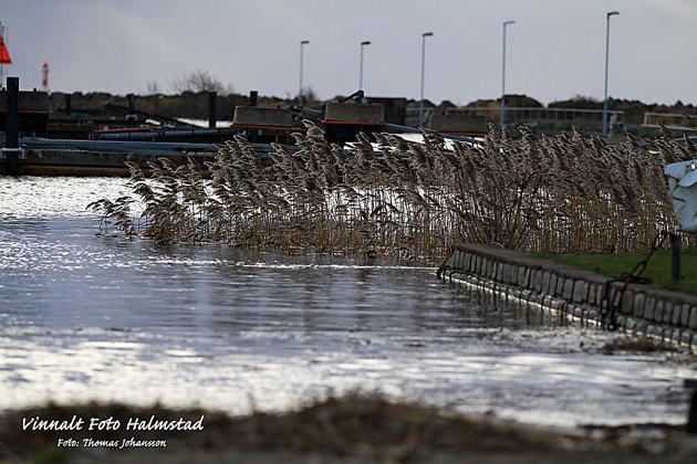 Halmstads Segelsällskaps hamn ligger lite mer skyddat i NW vind men vattnet var uppe i vägnivå.