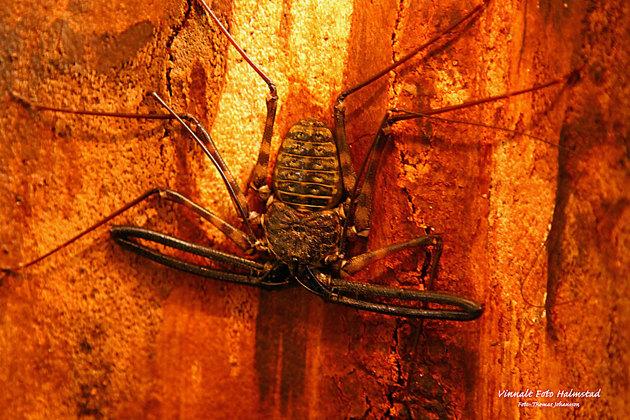 Detta är en typ av Skorpion...