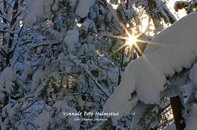 Vackra vinterdagar