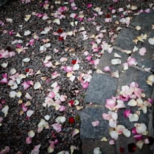 rosenblad