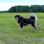 Aquila 5.5 years old