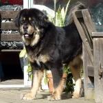 Ruffa 4,5 years old
