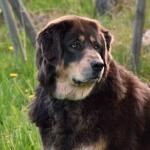 Aquila 7,5 years old