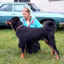 Bod Khyi Sierras Tsho Koori 8.5 months old. Thanks to Anna, his owner, for this picture!