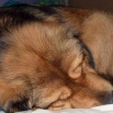 Disa sleeps P1540404