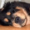 Kaluha does not sleep P1540406