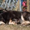 Aquila enjoying the sun P1540780