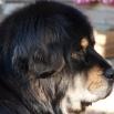 Ruffa profile P1540746