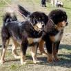 Pauliina and Humla best P1560317