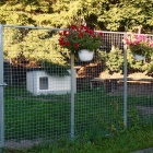 dogsyard P1570860