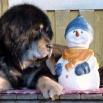 Ruffa and snowman big P1620538