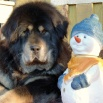Ruffa and snowman P1620543
