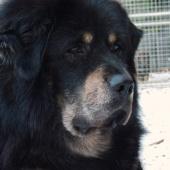 Simus 6 years old