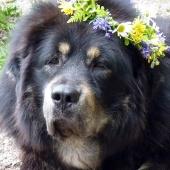 Simus 6,5 years old