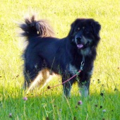 Simus 6.5 years old
