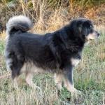 Aquila 8 years old