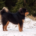 Humla posing in snow P1630312